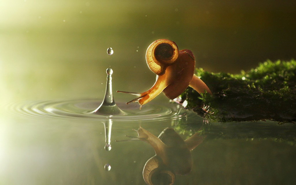 snail_with_a_water_drop